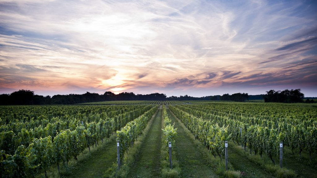 Bedell Cellars Vineyard in Long Island