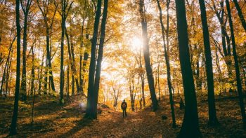 Hiking in the Autumn by Unsplash