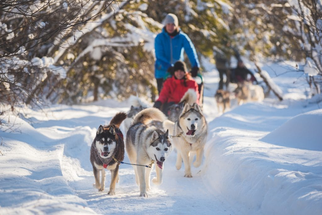 Quebec Dog Sledding