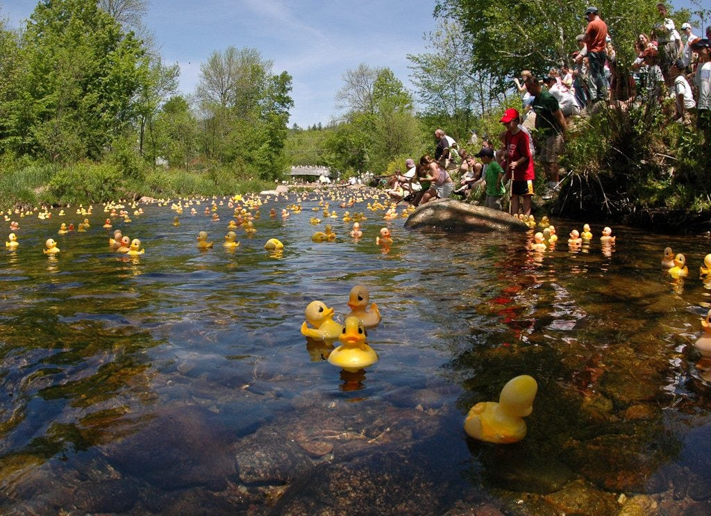 Wildquack Duck Race Jackson