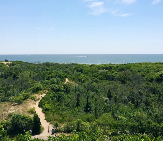 Fort Tilden Trail View 2 by Sarah Knapp