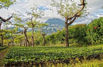 Guatemala coffee tours