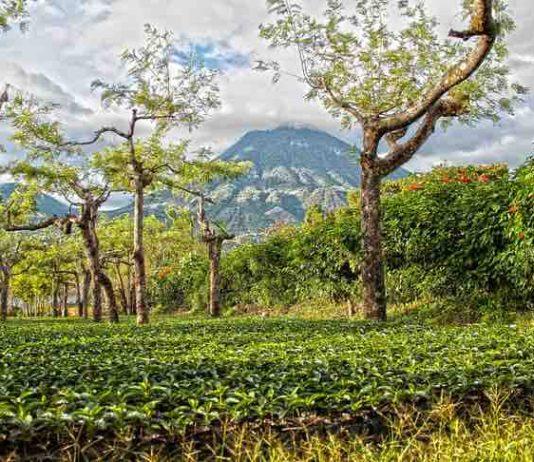 Guatemala coffee tours