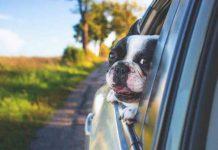 Car Sickness in dogs